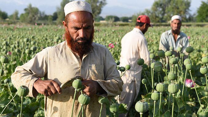 Opium ist für viele arme Menschen in Afghanistan die einzige Einnahmequelle.