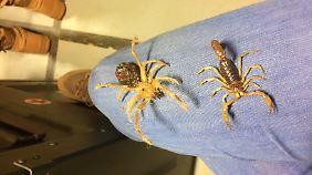 An die Krabbeltiere in Mali kann man sich nur schwer gewöhnen.