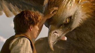 """""""Phantastische Tierwesen"""" im Kino: Fans kommen auch ohne Harry Potter auf ihre Kosten"""