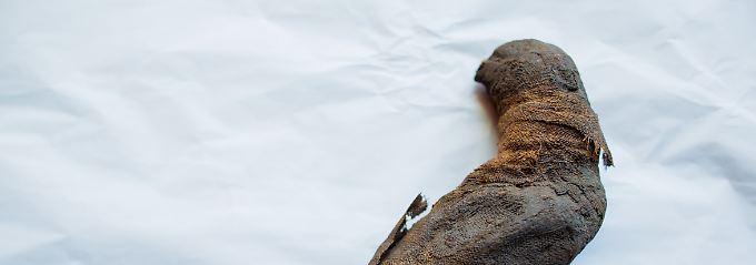 Fundsache, Nr. 1340: Hausmeister entdeckt Vogelmumie in Truhe