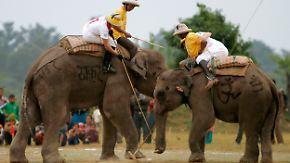 Internationale Meisterschaft in Nepal: Dickhäuter begeistern beim Elefanten-Polo
