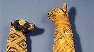 Schön gewickelt für die Ewigkeit: Tierische Mumien