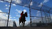Noch sind die Pferde an die menschliche Berührung nicht gewöhnt.