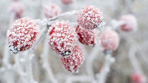Nachts minus 20 Grad am Alpenrand: Deutschland muss sich warm anziehen