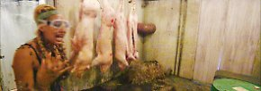"""… überhaupt nicht. Sie hat nämlich eine Phobie vor toten Tieren. Erst recht, wenn sie noch so """"ganz"""" sind wie diese armen Schweine hier. Dennoch …"""