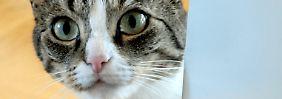 Streuner nicht einfach behalten: Fremde Katze, neues Haustier?