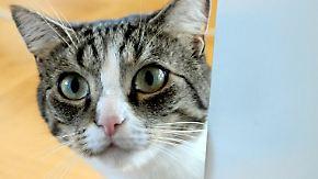 13 Millionen Stubentiger in Deutschland: Das Thema Katzensteuer ist zurück