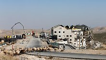 A Palestinian man leads sheep across a road near a construction site in the Israeli settlement of Maale Adumim, in the occupied West Bank February 7, 2017. REUTERS/Ammar Awad