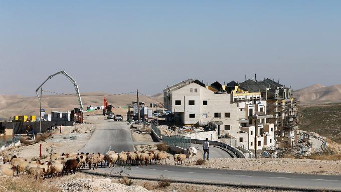Ein palästinensischer Schäfer führt seine Tiere an einer israelischen Siedlung im Westjordanland vorbei.