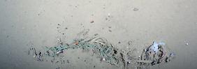 Glas und vor allem Plastik: In der arktischen Tiefsee landet mehr Müll