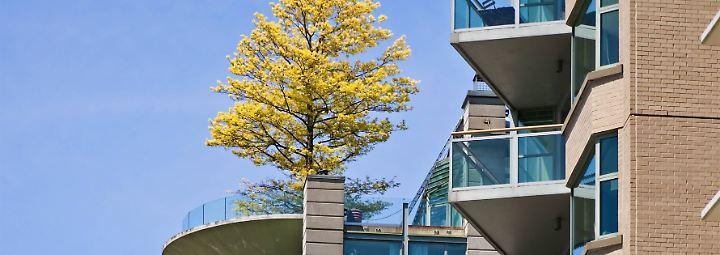 schleichende bepflanzung darf ein baum auf den balkon n. Black Bedroom Furniture Sets. Home Design Ideas
