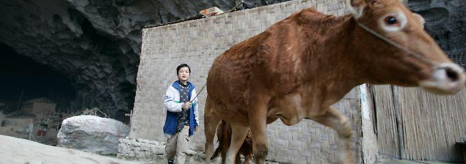 Chinese baut Seilbahn zur Grotte: Wenn Höhlenbewohner auf Touristen treffen