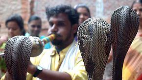 Uralte Dompteurskunst in Indien: Schlangenbeschwörer sollen Fähigkeiten sinnvoll einsetzen