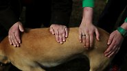 Die Patienten sind 24 Stunden am Tag verantwortlich für die Tiere.
