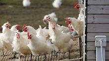 Entschädigung nach Vogelgrippe: Bund plant keinen Antrag auf EU-Hilfen