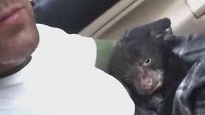 """""""Er atmete und bewegte sich nicht"""": Wanderer rettet Bärenbaby - und wird angeklagt"""