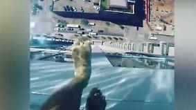 Nervenkitzel im 43. Stock: Skypool in Houston ist nur was für ganz Mutige