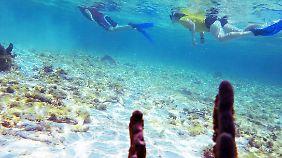 Schnorchler am Belize Barrier Reef.