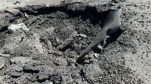 Untersuchung zu Chan Scheichun: UN: Syrien für Giftgasangriff verantwortlich
