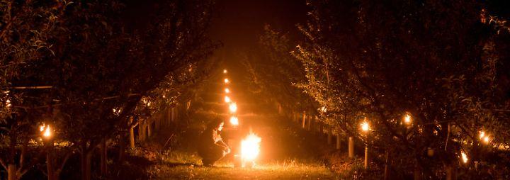 Diese Lichterpracht hat etwas Weihnachtliches - doch das festliche Glühen ist kein verfrühter Festtagsschmuck. Riesige Wachskerzen in Eimern brennen zwischen Pfirsichbäumen im baden-württembergischen Norsingen.