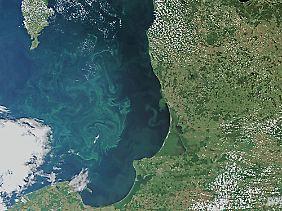Blaualgen auf der Ostsee im Danziger Becken. Künstlich hervorgerufene Algenblüte könnte der Atmosphäre CO2 entziehen.