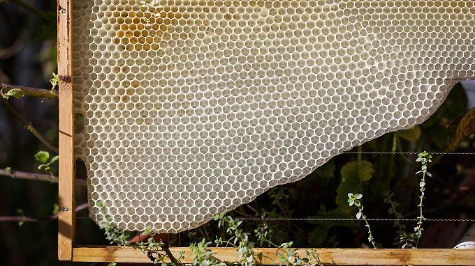 """Die Struktur ist effizient und stabil. Aber """"wissen"""" Bienen das?"""