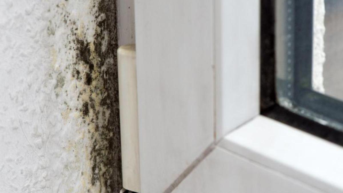 schimmelschaden vor gericht wann ist der vermieter verantwortlich n. Black Bedroom Furniture Sets. Home Design Ideas