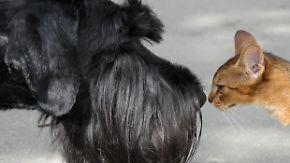 Vermittlung, Tierarzt, Versicherung: So viel kosten Haustiere im Monat