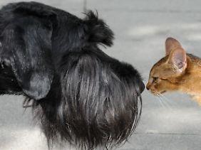 Auf Hunde und Katzen entfallen etwa 25 Prozent der im Land verbrauchten Kalorien aus der Viehhaltung.