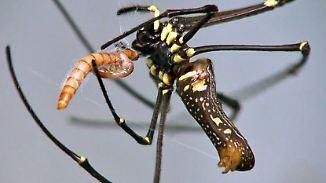 Innovationen aus der Natur: Was Forscher von Spinnen und Krebsen lernen