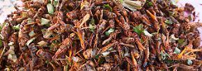 Nahrhaft und klimafreundlich: Insekten, die man essen kann