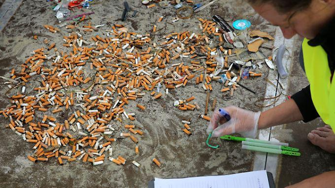 Da kommt einiges zusammen: Hier werden Zigarettenkippen am Ostsee-Strand von Zingst gesammelt und registriert.
