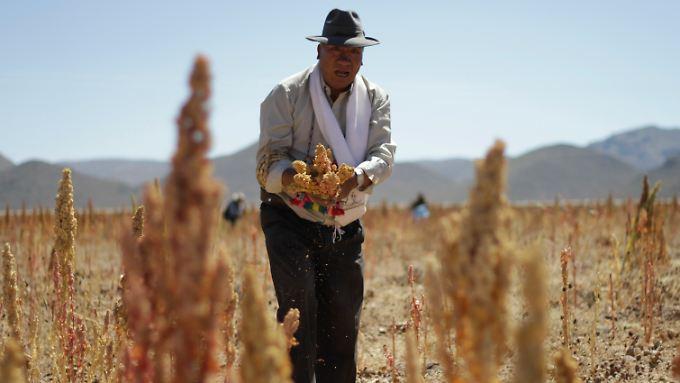 Für viele Bauern reicht der Verdienst von Quinoa nicht mehr.