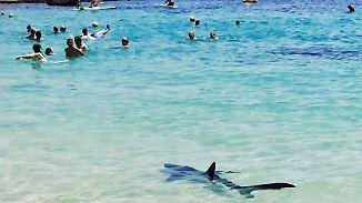 Drei Sichtungen, ein totes Tier: Blauhai versetzt Badegäste auf Mallorca in Panik