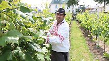 Weinanbau in Berlin: Die Traube hat hier Tradition