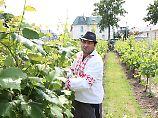 IN ARBEIT Weinanbau in Berlin: IN ARBEIT Die Traube hat hier Tradition