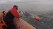 Unglückliche Befreiungsaktion: Wal-Retter vom Wal erschlagen