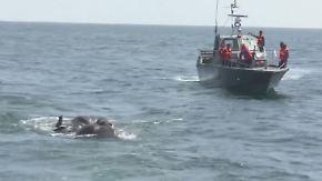 Zu weit rausgeschwommen: Marine rettet zwei Elefanten aus Seenot