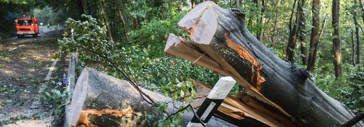 Entwurzelte Bäume und Stromausfall: Erneut toben schwere Unwetter über Deutschland