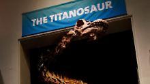 So schwer wie eine Boeing: Weltgrößter Dinosaurier erhält einen Namen
