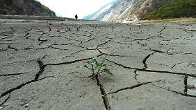 Auch bei Dürren gab es einen neuen Rekord.