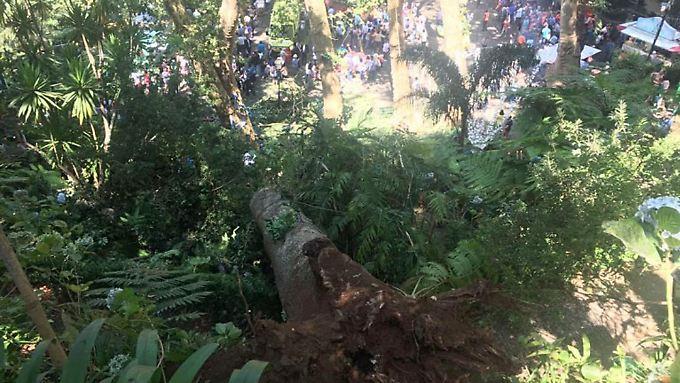 Der Baum soll schon vor Jahren als umsturzgefährdet eingestuft worden sein.