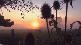Lila Wolken und rosa Nebel: Spätsommer färbt Abendhimmel bunt
