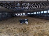 """""""Unmöglich, Bedarf zu decken"""": Molkerei-Riese warnt vor Milch-Knappheit"""