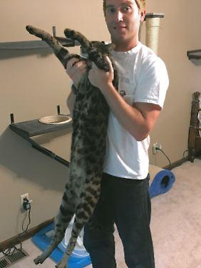 Doch recht groß, die Katze.
