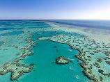Tödliche Seesterne in Australien: Riesenschnecke soll Korallen retten