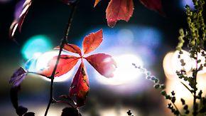Herbst präsentiert sich wechselhaft: Nacht bringt feuchtes Klima und Schauer