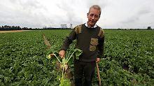"""""""Das war Planwirtschaft"""": Rübenbauern begraben die Zuckerquote"""