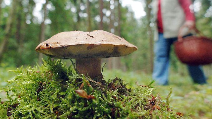 Die Konzentration von Ruthenium-106 in Sachsen ist zwar erhöht, Gefahr für Mensch und Umwelt besteht aber nicht.