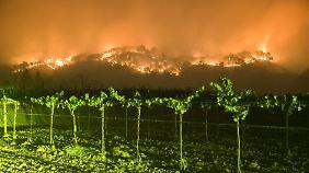 Ein Waldbrand wütet in Napa County in der Nähe der Weinberge.